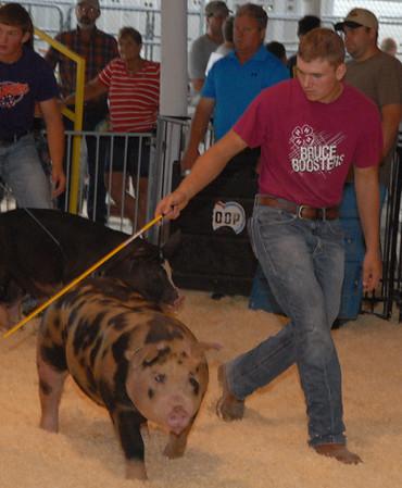 Benton County Fair Derby Swine winners