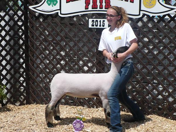 Benton County Fair Rabbit Show